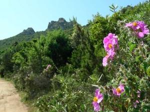 herrliche Natur im Frühjahr auf Sardinien