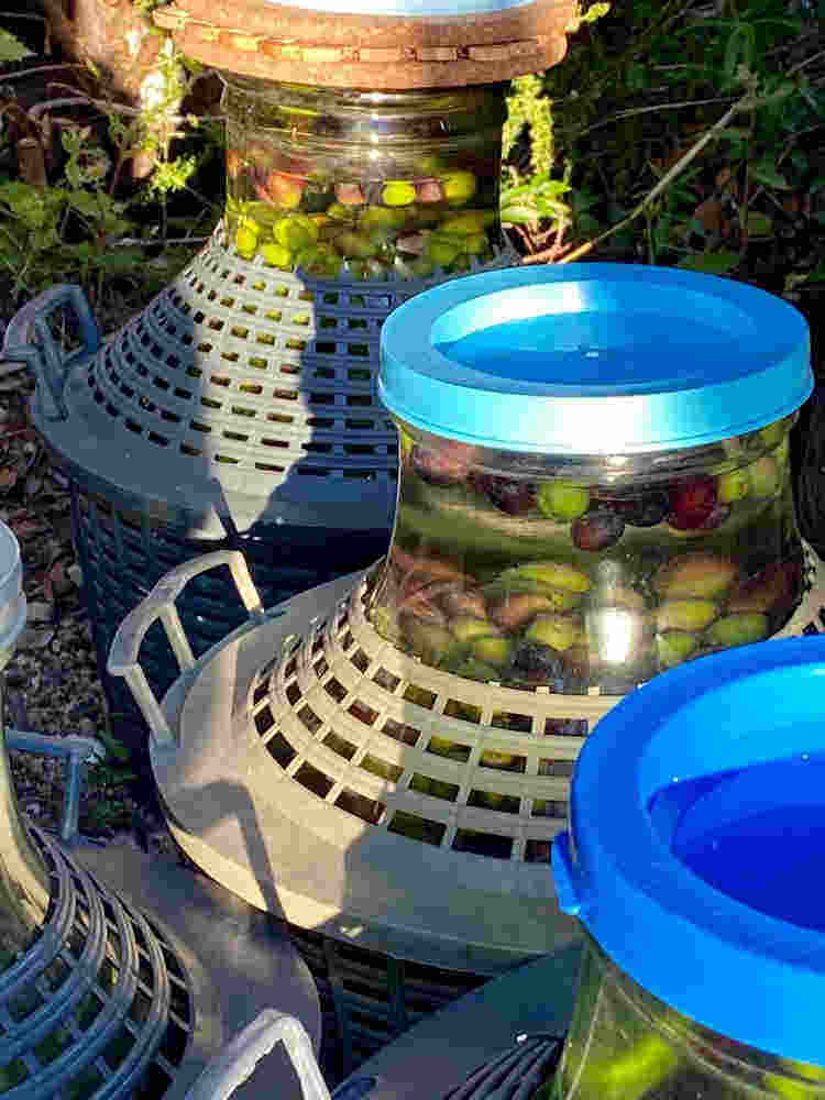 olives in highly energized water