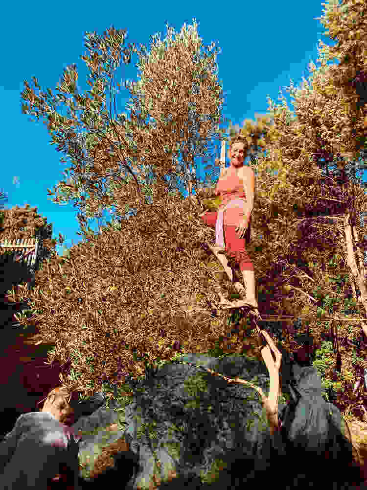 cheerful olive harvest Cala Jami meditation camp 2020