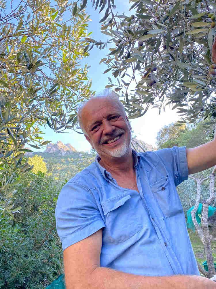 olive harvest 7