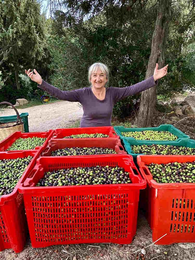 olive harvest Sufi Earth Spirit Cala Jami Sardinia 2020