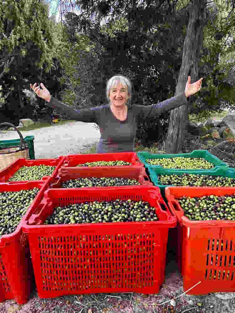 grateful for olive harvest Sufi meditation camp Cala Jami 2020