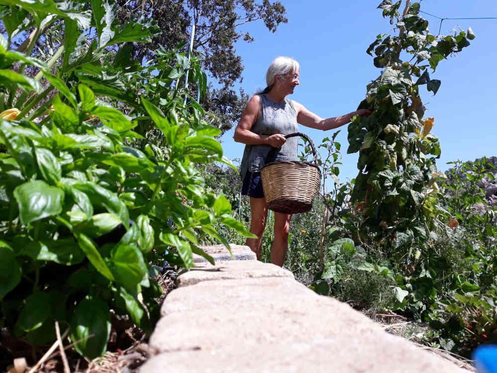 Sufi center Cala Jami 2020 vegetable garden